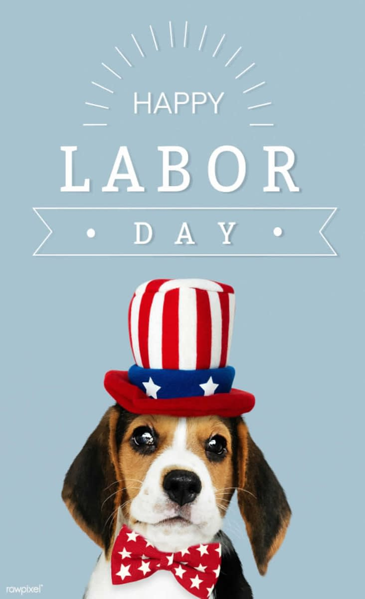 Image of Dog with American Flag Hat for Happy Labor Day * Bass Lake Realty